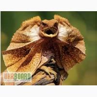 Продам Игуаны,вараны, хамелеоны, гекконы, бородатые агамы, сцынк