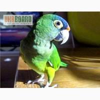Крупные и средние попугаи- в продаже разные виды