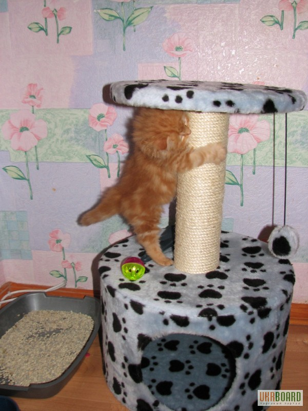 Домик для кошки сделай своими руками фото