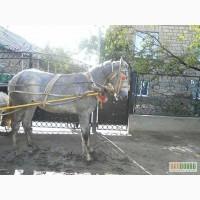 Орловский Рысак - Мираж
