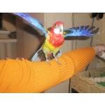 Розеллы и другие мелкие породы попугаев