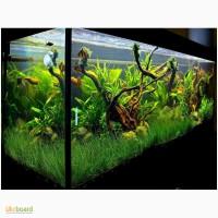Обслуживание и оформление пресноводных аквариумов