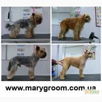 Бесплатная стрижка собак Киев, груминг и тримминг собак в Киеве
