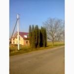 Продам Тую Колумна(Columna), крупномер 6.5м-7.5 м