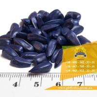 Семена подсолнечника / Насіння соняшника Ясон від виробника