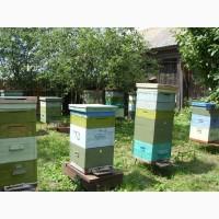 Продам бджолосім#039;ї 2018 року с корпусними вуликами