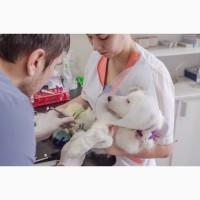Кастрация кота, вызов ветврача Харьков, стерилизация