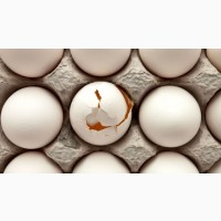 Покупаем яйцо некондицию оптом