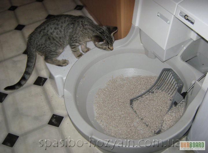 Как убирать за кошкой в домашних условиях