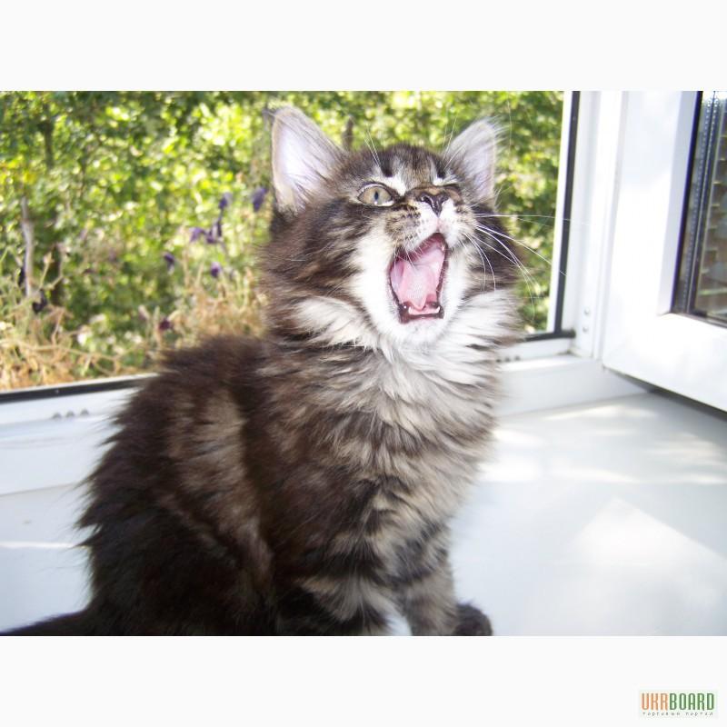 Корм для стерилизованных и кастрированных кошек и котов