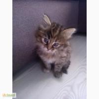 Очень красивые кошечки ищут хозяина
