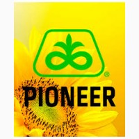 Семена подсолнечника Пионер DuPont Pioneer