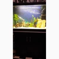 Продам аквариум 150 л с тумбой