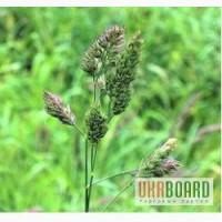 Продаем Семена сенокосных трав