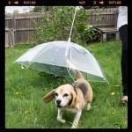 Зонтик для собак и кошек, оригинальный подарок владельцам животных