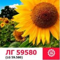 Семена подсолнечника ЛГ59580