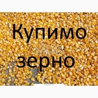 Закуповуємо кукурудзу у сільгоспвиробників з ПДВ