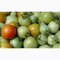 Продам зелені помідори