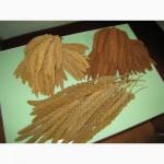 Корм чумиза,могар-лакомство для декоративной птицы