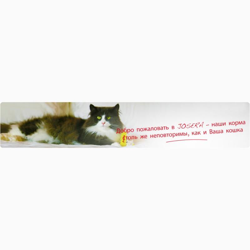 Влажный корм для кошек Royal Canin Intense Beauty в желе