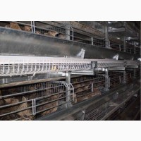 Клеточное оборудования для выращивания перепелов ОКП-6