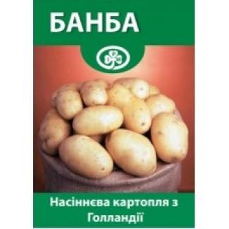 Семенной Картофель Банба 1 Репродукция Голландия