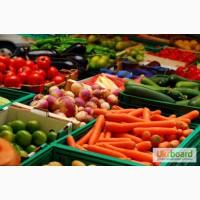 Куплю картофель, морковь, лук, капусту, буряк, помидоры, огурцы, чеснок овощи