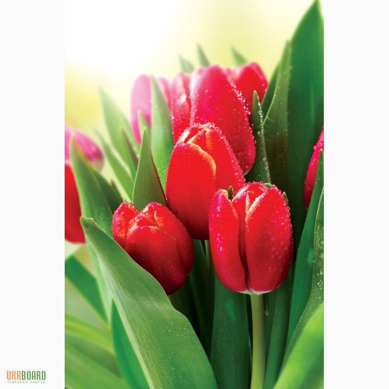 Тюльпаны оптом купить зеленоград цветы семена заказать