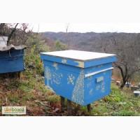 Продам пчелы с ульями