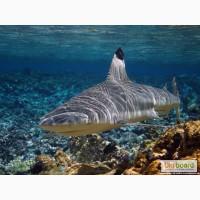 Продам рыбу из Индийского океана