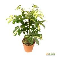 Комнатные растения большой выбор