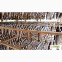 Вяленая рыба! Оптом, низкие цены(Плотва, чехонь, лещ) Вкусная и полезная