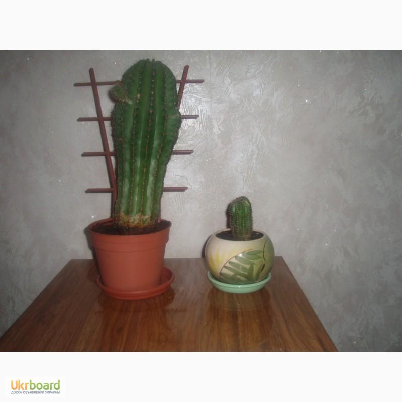 Фото 2. Продам комнатные цветы в горшках