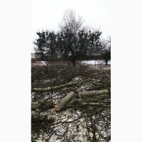 Профессиональная обрезка и валка деревьев