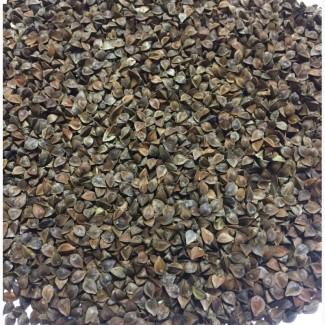Семена гречихи сорт Девятка; Дикуль, 1-я репродукция