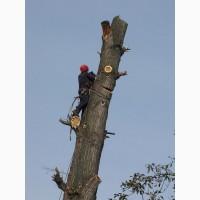 Професійне зрізання, кронування дерев Калуш