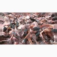 Продаем Рыбные отходы
