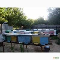 Продам пчёлы