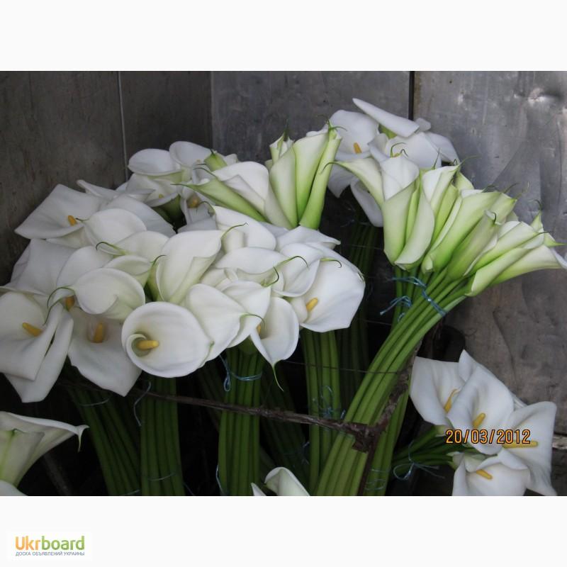 Каллы цветы смерти почему приметы