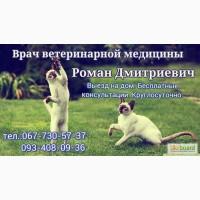 Кастрация котов О67 7З0 57 З7, Стерилизация кошек О93-4О8-09-З6
