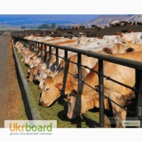 Куплю КРС(корова, телка, бык, овцы, лошади)живым весом дорого