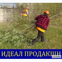 Вырубка поросли Одесса