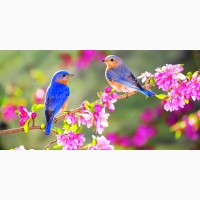 Напишу красивые поздравления в стихах