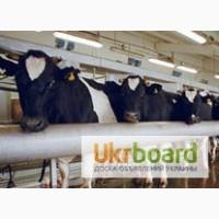 Премикс 1% Зоовит - Молочная коровка д/высокудойных коров больше 7 т.л
