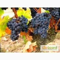Изысканное красное сухое ЭКО-вино КАБЕРНЕ ФРАН