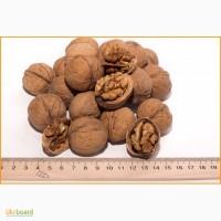 Продам грецкий орех калиброванный 28+ на экспорт урожай 2018