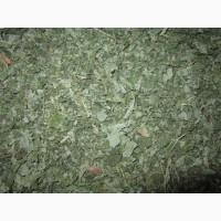 Лещина (орешник) лист для шиншилл, дегу и др