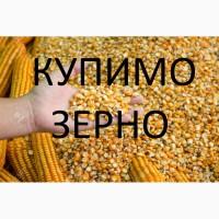 Великі об'єми вологої кукурудзи