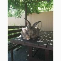 Продам кроликов обер 4-6 месяцев