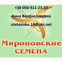 Семена ярового ячменя Себастьян - 1 репродукция